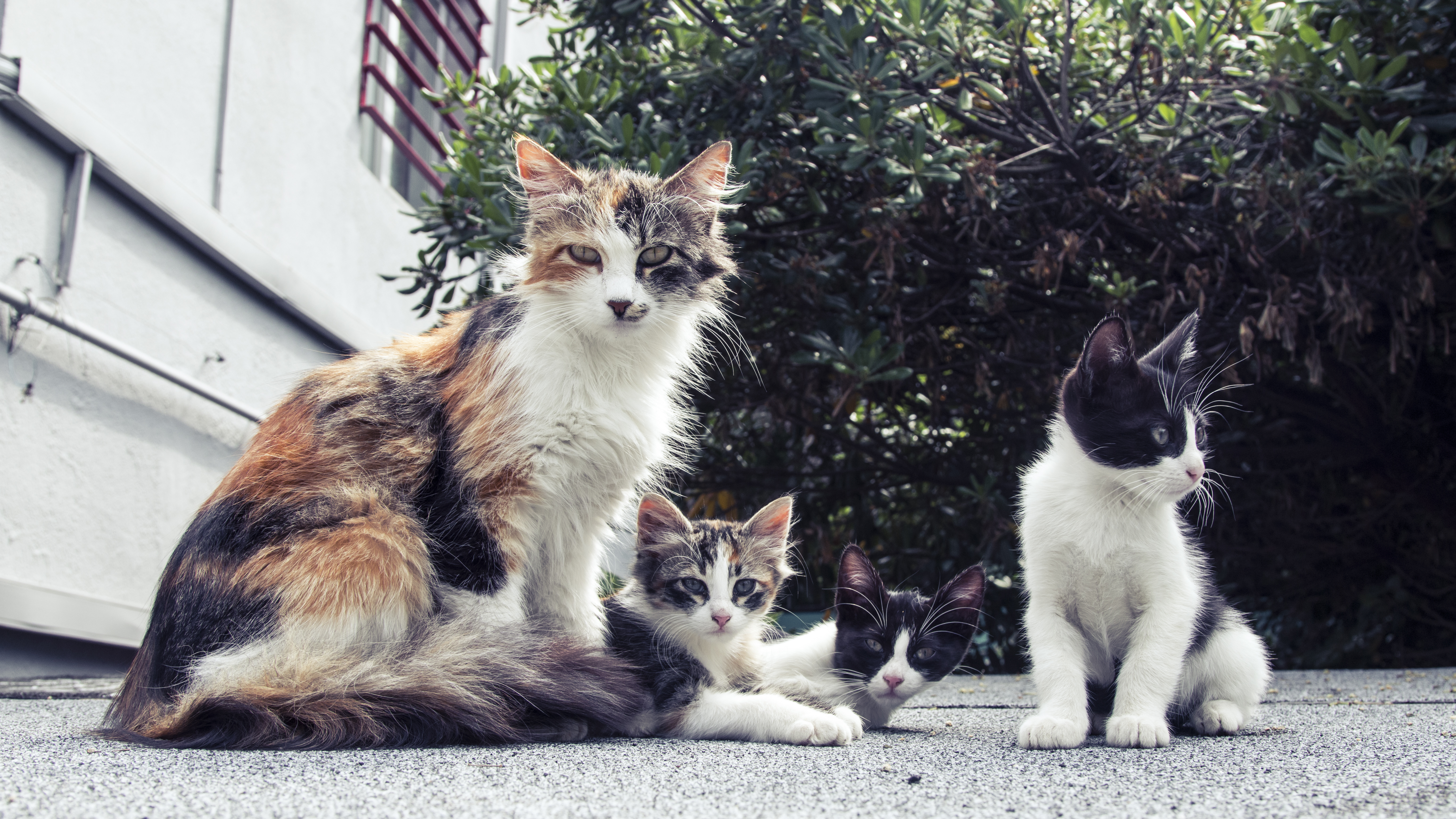 Cats in a group